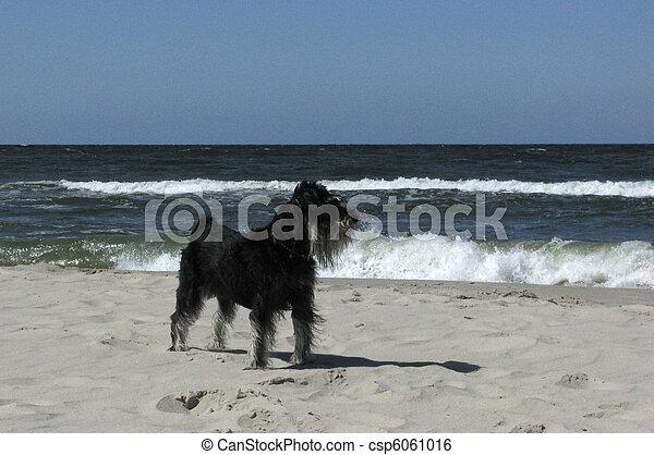 dog on the beach - csp6061016