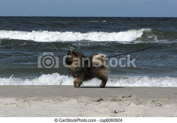 dog on the beach - csp6060924