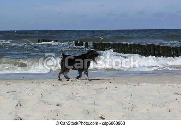 dog on the beach - csp6060963