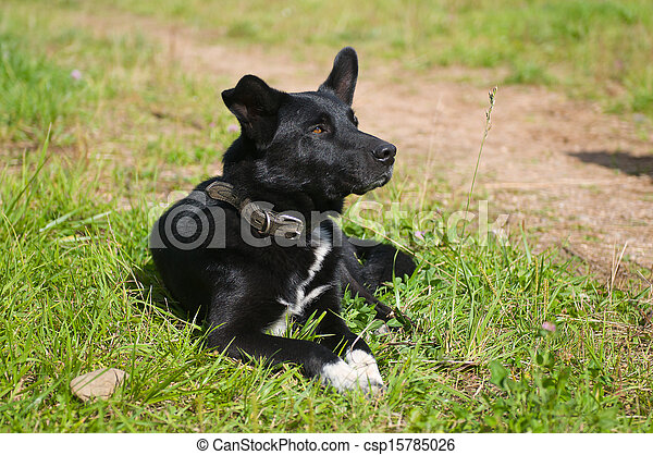 Dog on the lawn - csp15785026