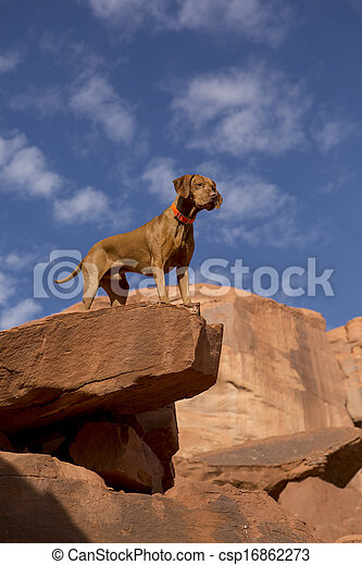 dog on the top of the cliff - csp16862273