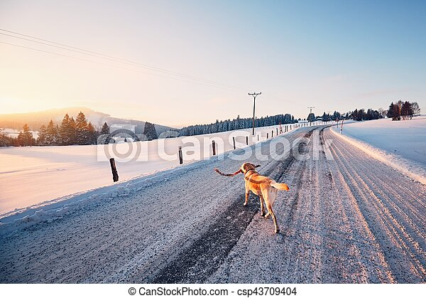 Dog on the winter road - csp43709404