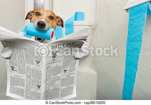 dog on toilet seat - csp38519205
