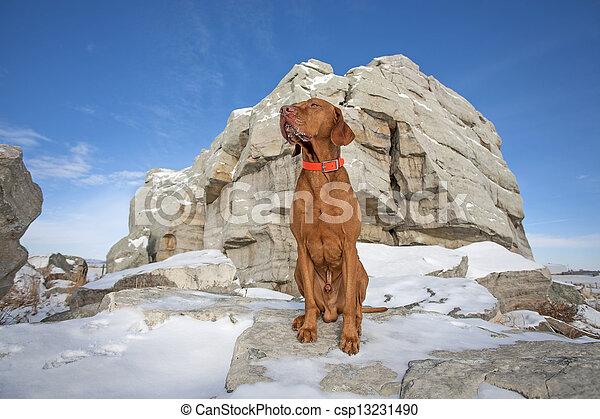 dog outdoord in winter - csp13231490