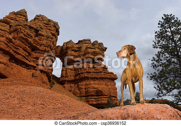 dog outdoors on red cliff - csp36936152