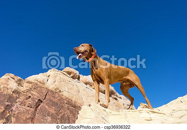 dog outdoors - csp36936322