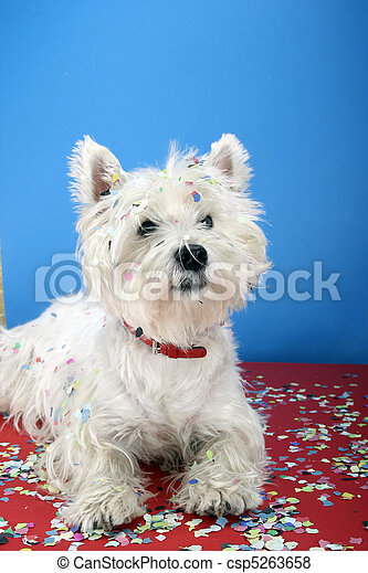 Dog party - csp5263658