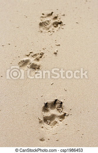 4ff75b224 Dog paw prints in the sand. A set of three dog paw prints in the ...