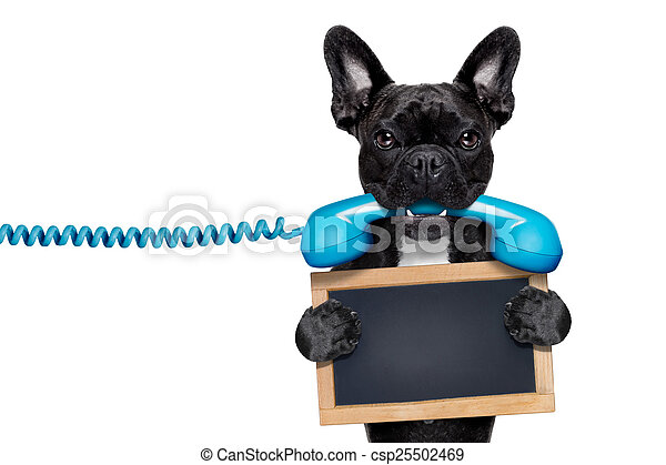 dog phone telephone - csp25502469