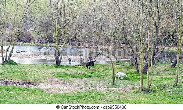 Dog playing in a garden - csp9550406