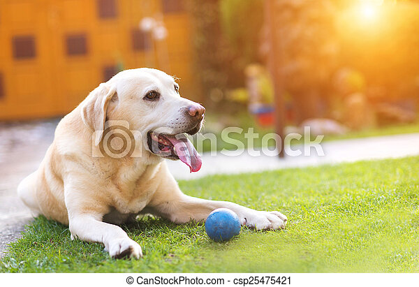 Dog playing outside - csp25475421