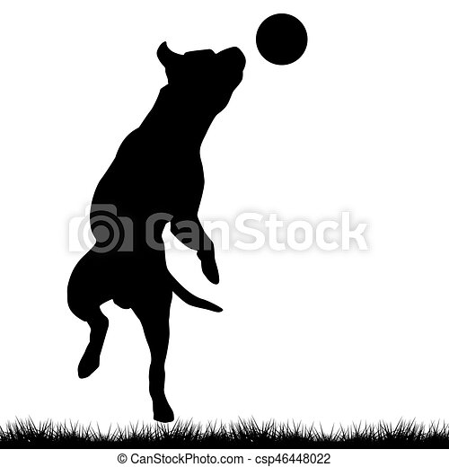 Dog playing with ball - csp46448022