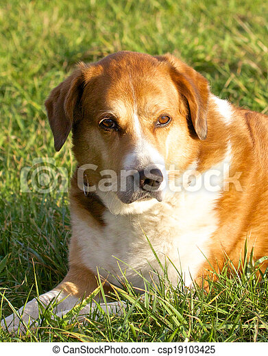 Dog portrait on the meadow - csp19103425