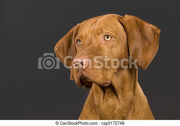 dog portrait - csp3172749