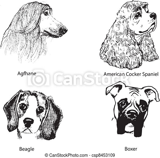 Dog portraits. - csp8453109