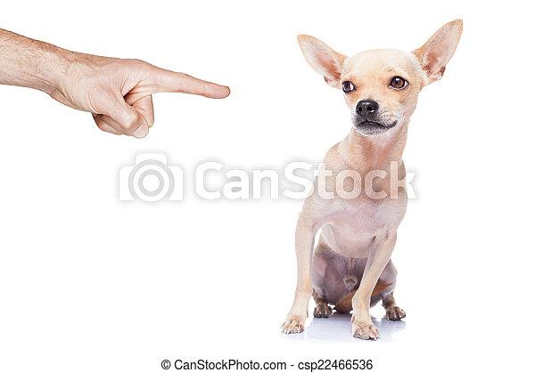 dog punished - csp22466536