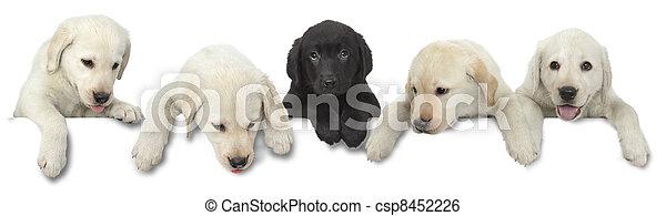 Dog puppy white and black - csp8452226