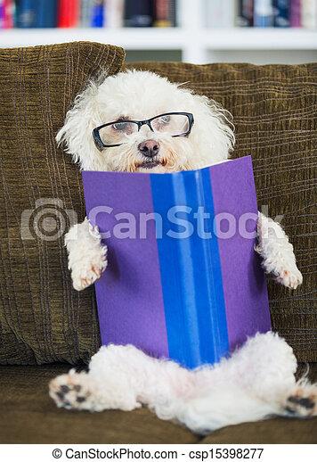 Dog Reading Book - csp15398277