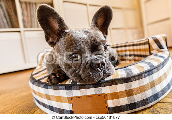 dog resting on bed at home - csp50481877