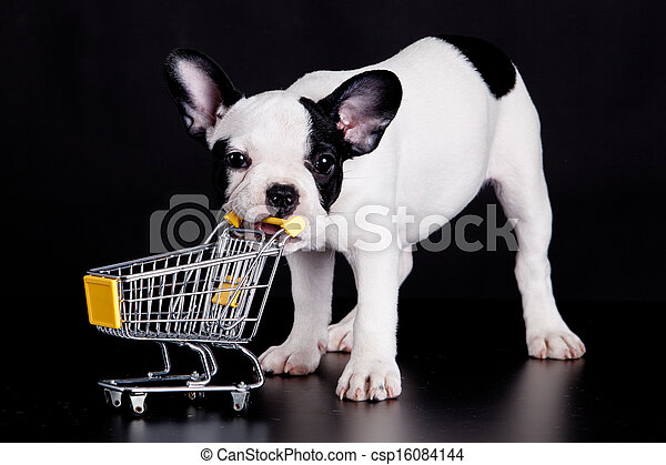 dog., rigolote, peu, bouledogue, supermarché, francais, jouer, cart. - csp16084144