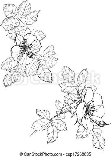 Dog Rose Kvetiny Pero Kresleni Neposkvrneny Pero Graficke