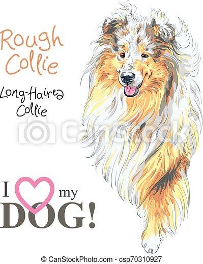 dog Rough Collie breed vector - csp70310927