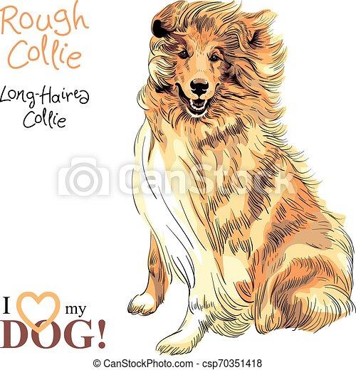 dog Rough Collie breed vector - csp70351418
