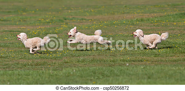 Dog running in a field. - csp50256872