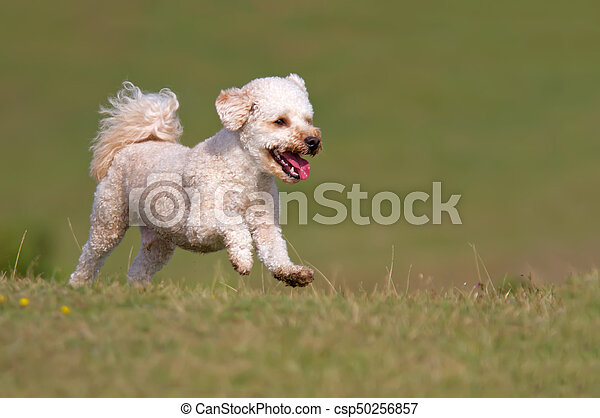 Dog running up a grassy hill - csp50256857