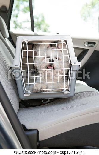 Dog safe in the car - csp17716171