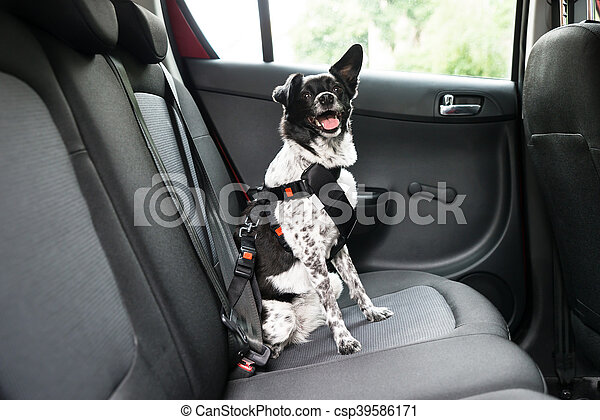 Dog Sitting In A Car - csp39586171