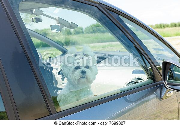 Dog sitting in a car - csp17699827