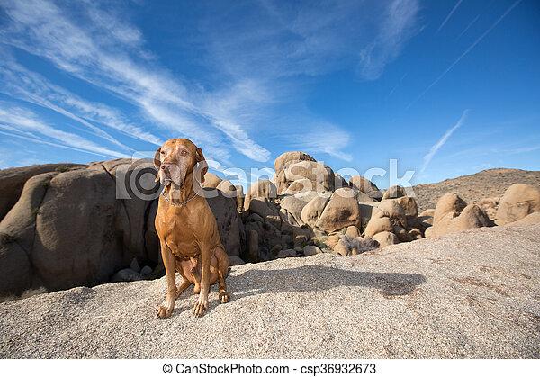 dog sitting in desert - csp36932673