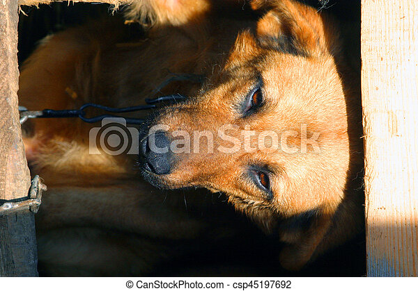 dog sitting in the booth - csp45197692