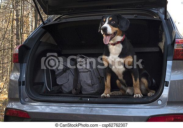 Dog sitting in the car. - csp62762307