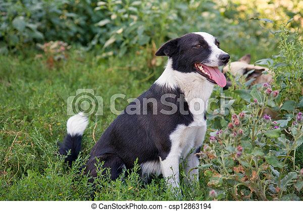 dog sitting in the grass - csp12863194