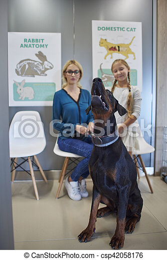 Dog sitting in the waiting room - csp42058176
