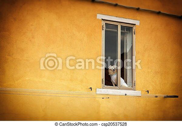 Dog sitting in the window - csp20537528