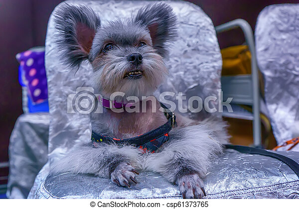 Dog sitting on a chair - csp61373765