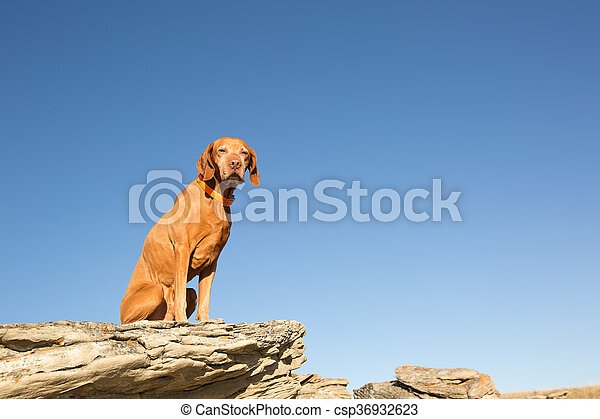 dog sitting on a cliff edge - csp36932623