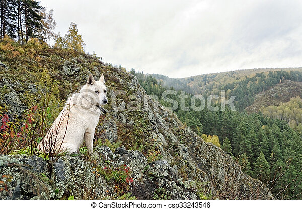 Dog sitting on a cliff - csp33243546