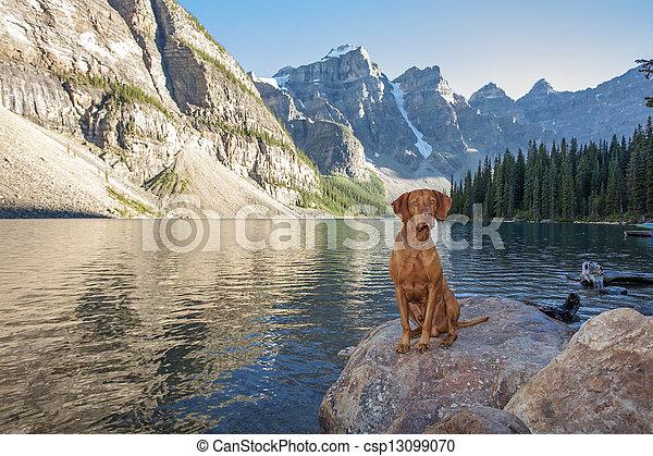 dog sitting on rock by glacier lake - csp13099070