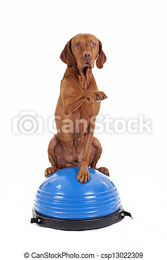 dog sitting on top of exercise ball - csp13022309