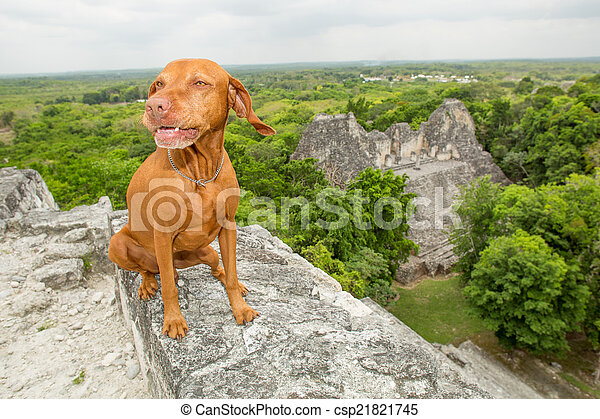 dog sitting on top of pyramid - csp21821745