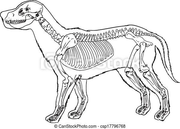 Dog Skeleton Outline