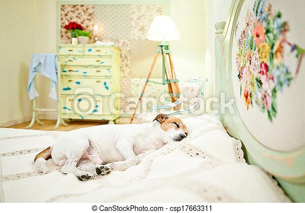 Dog sleeping on bed - csp17663311