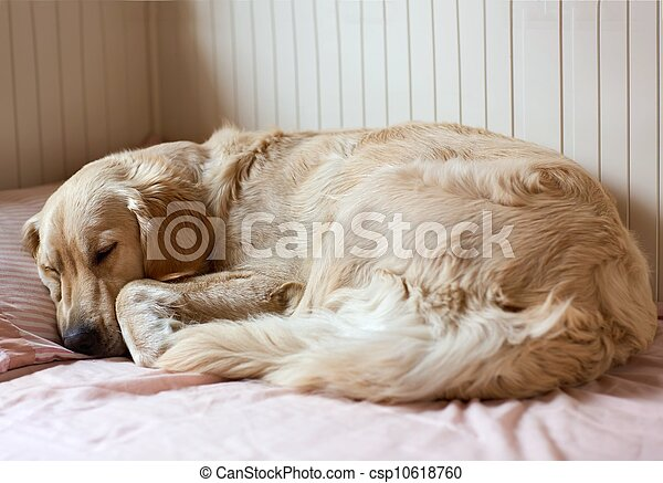 dog sleeping on the bed - csp10618760