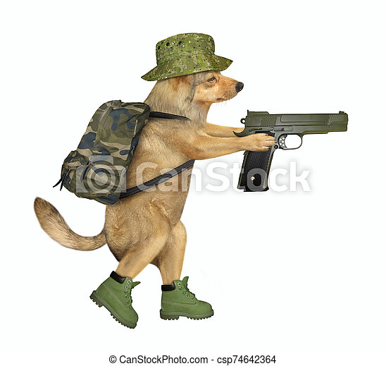 Dog soldier holds a gun - csp74642364