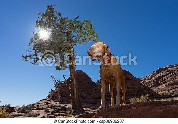 dog standing beside tree outdoors - csp36936287