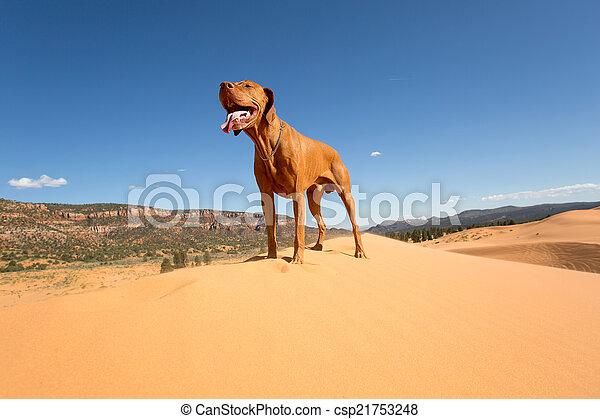 dog standing in desert - csp21753248